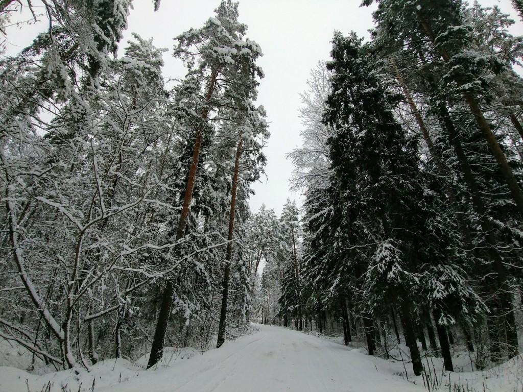 Снежных всем прогулок! 06
