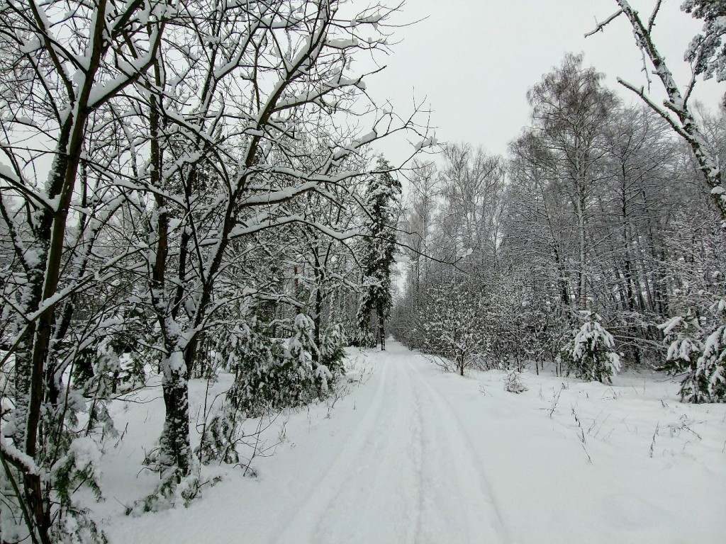 Снежных всем прогулок! 07