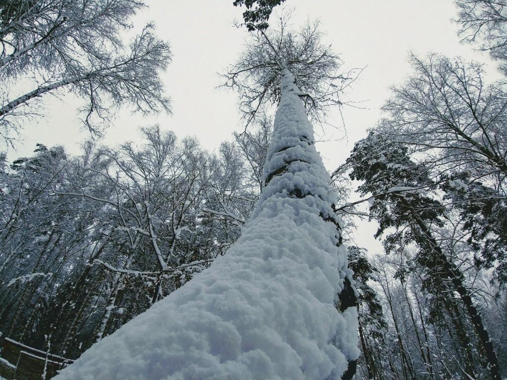 Снежных всем прогулок! 08