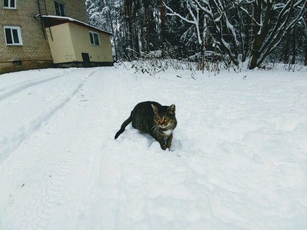 Снежных всем прогулок! 10