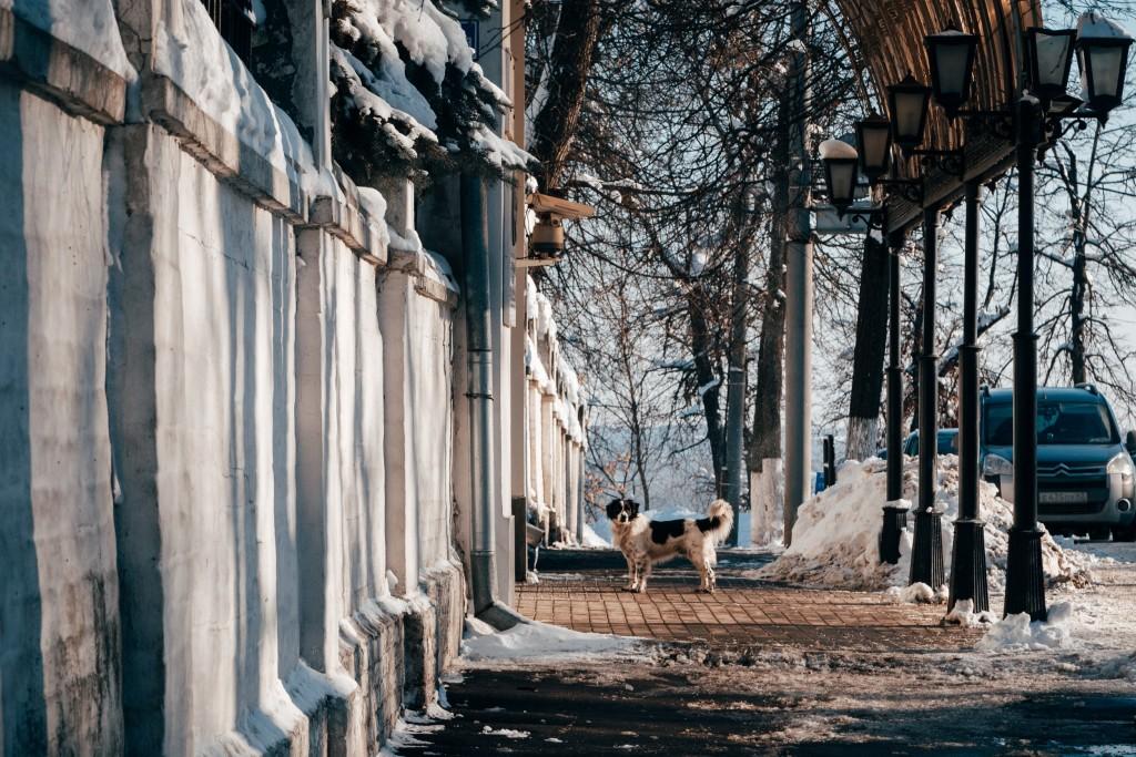 Владимир в феврале 08