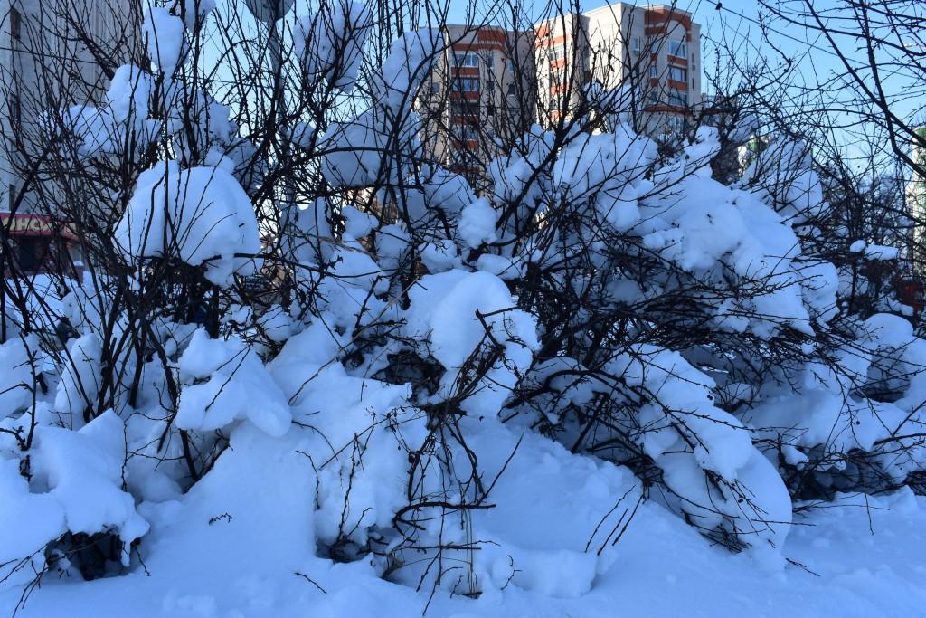 Владимир, улица Мира вблизи Дворца детского творчества 05