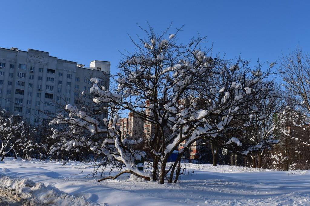 Владимир, улица Мира вблизи Дворца детского творчества 08