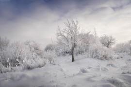 Замерзший сад. г.Вязники