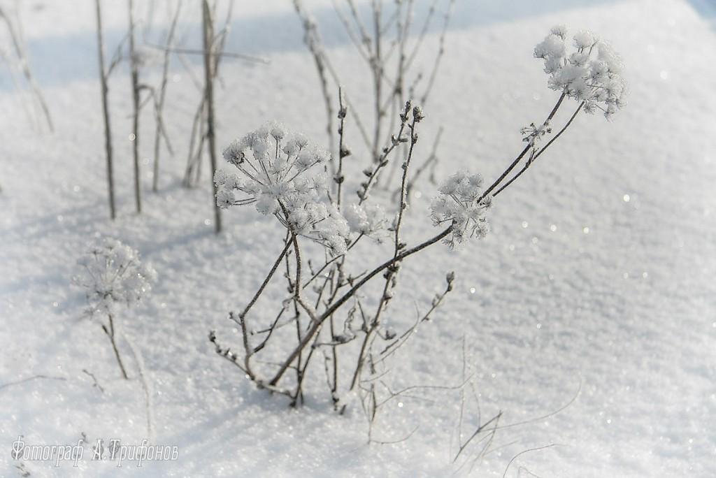 Зима в Муроме и окрестностях 12