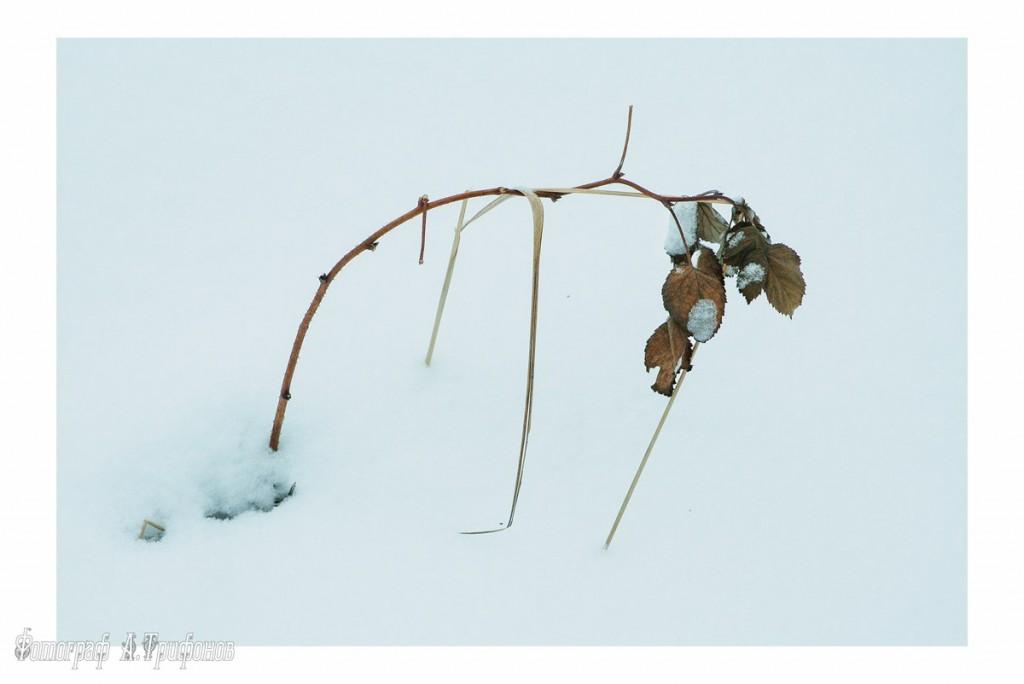 Зима в Муроме и окрестностях 14