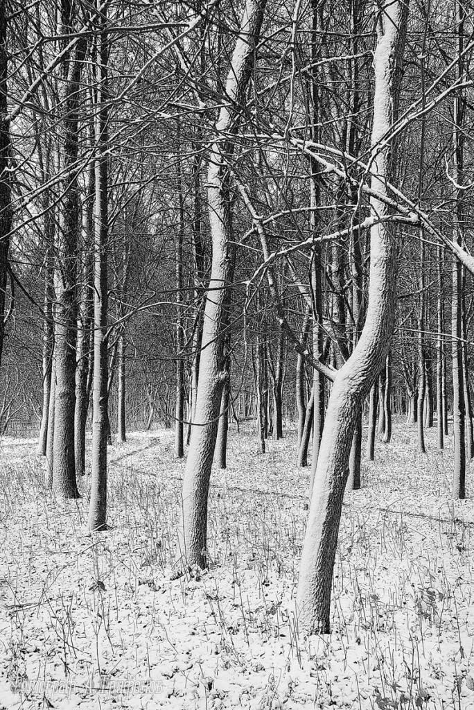 Зима в Муроме и окрестностях 17