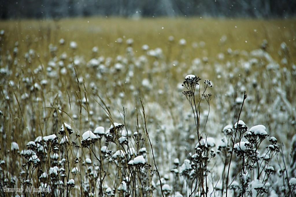 Зима в Муроме и окрестностях 19