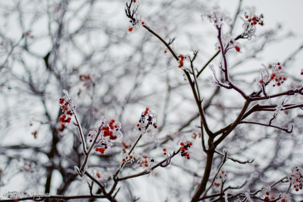 Зима в Муроме и окрестностях 22