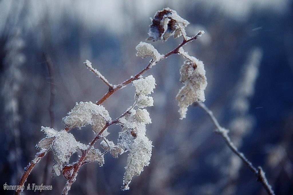 Зима в Муроме и окрестностях 41