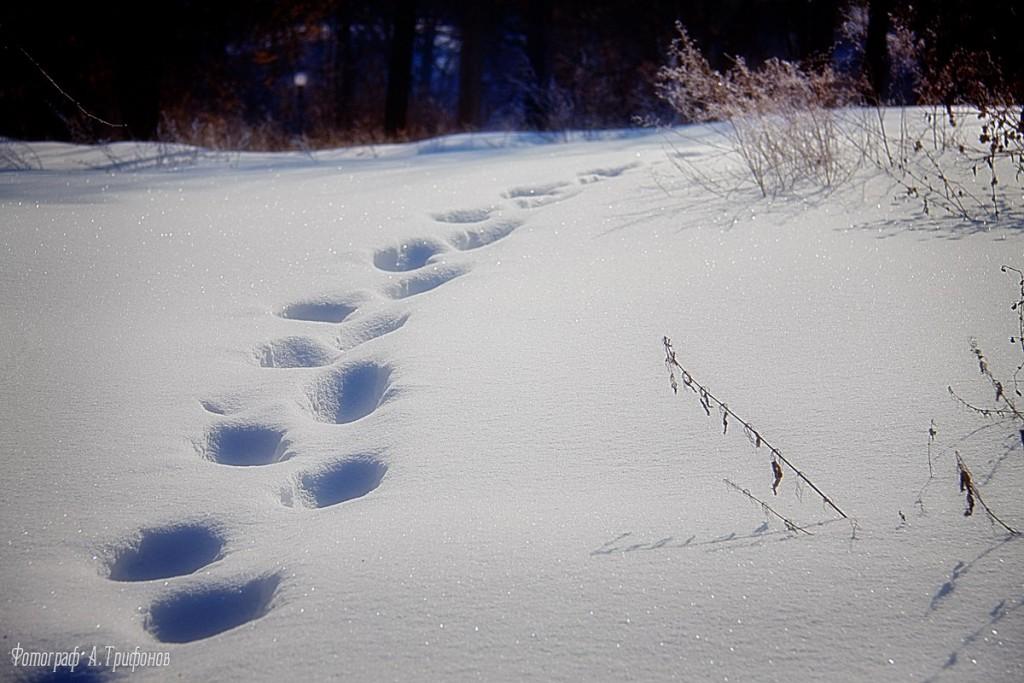 Зима в Муроме и окрестностях 43