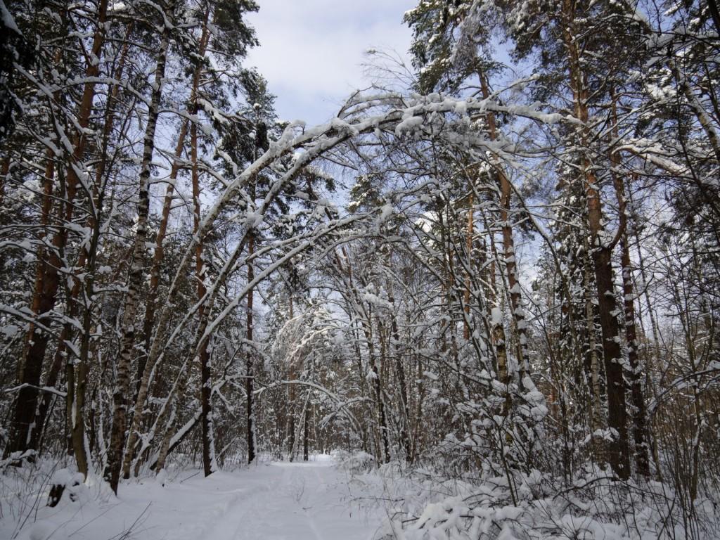 Зима в покровском лесу 01