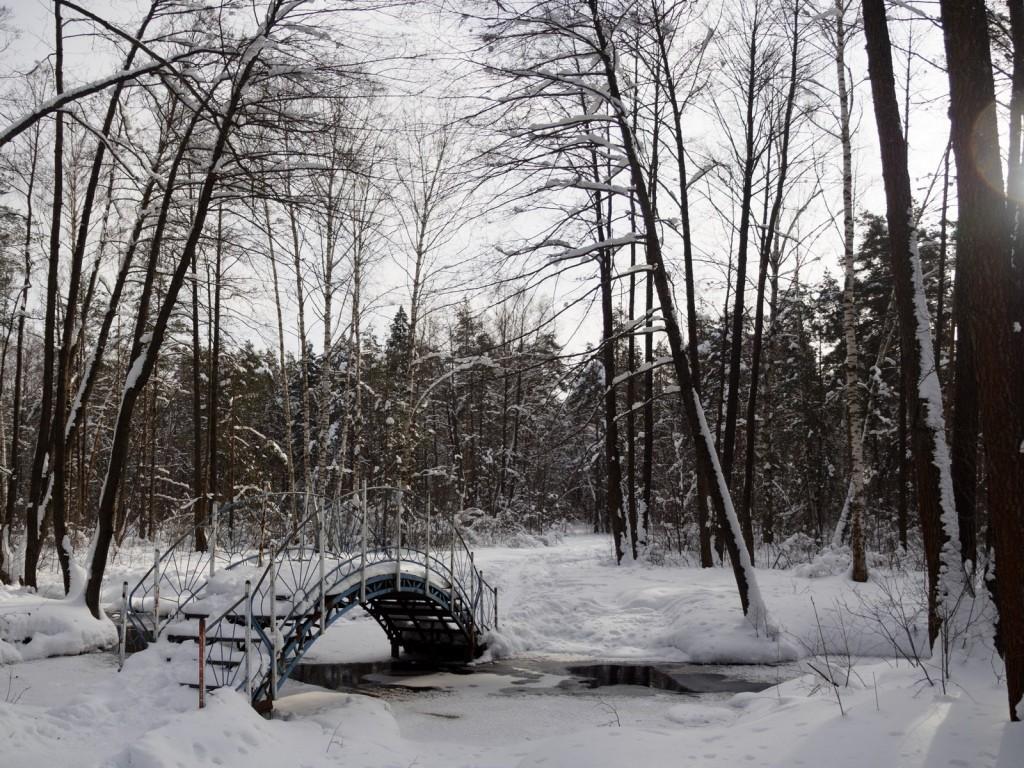 Зима в покровском лесу 02