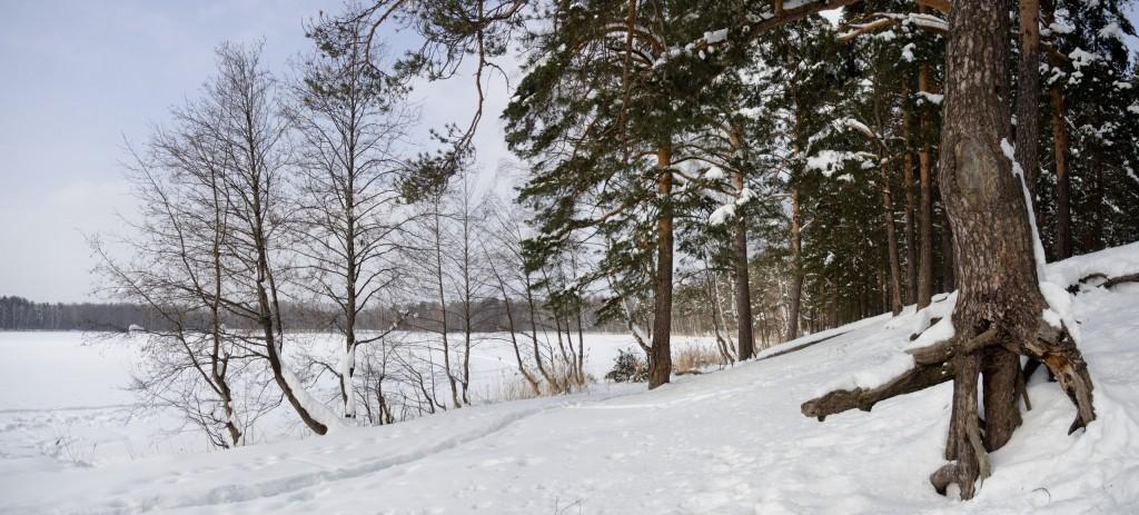 Зима в покровском лесу 03