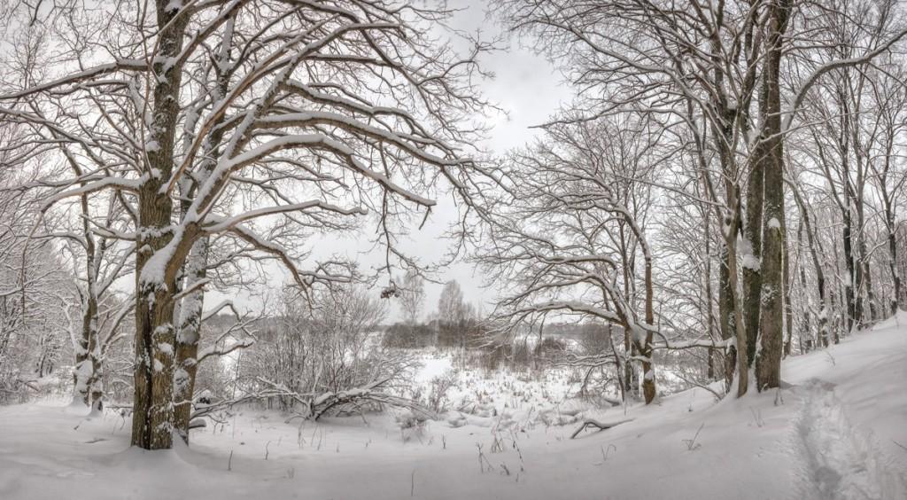 Снежное начало февраля в Александрове, 02.02.2018 02