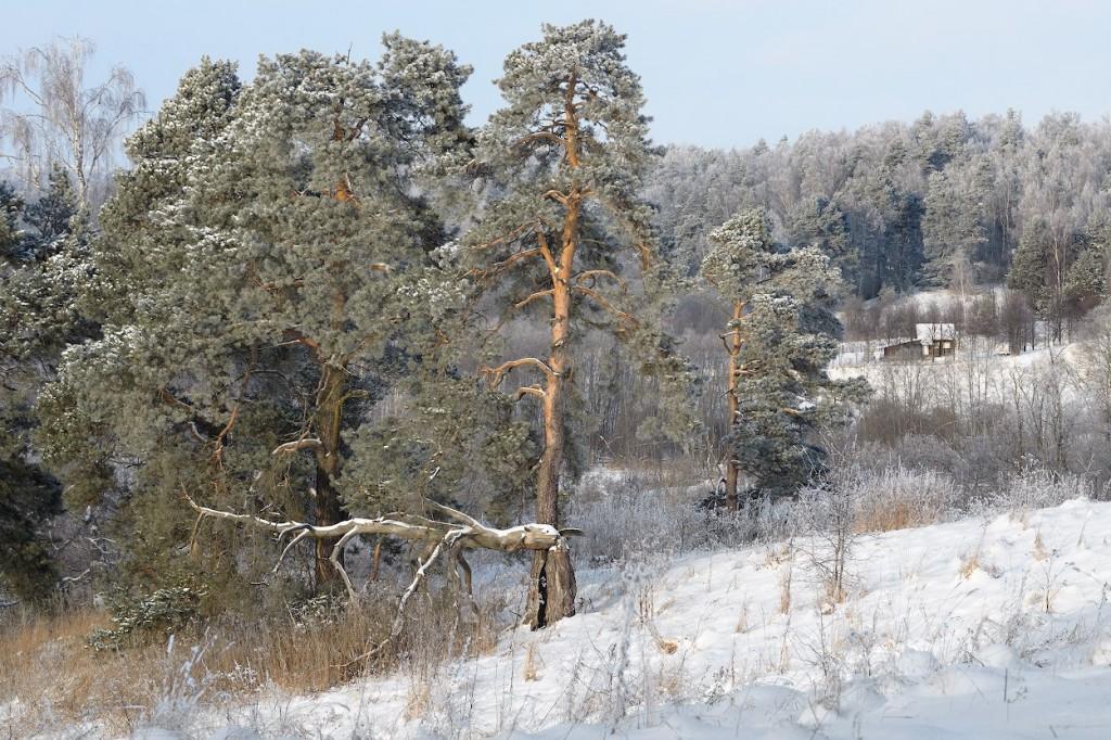 Собинский район зимой 02