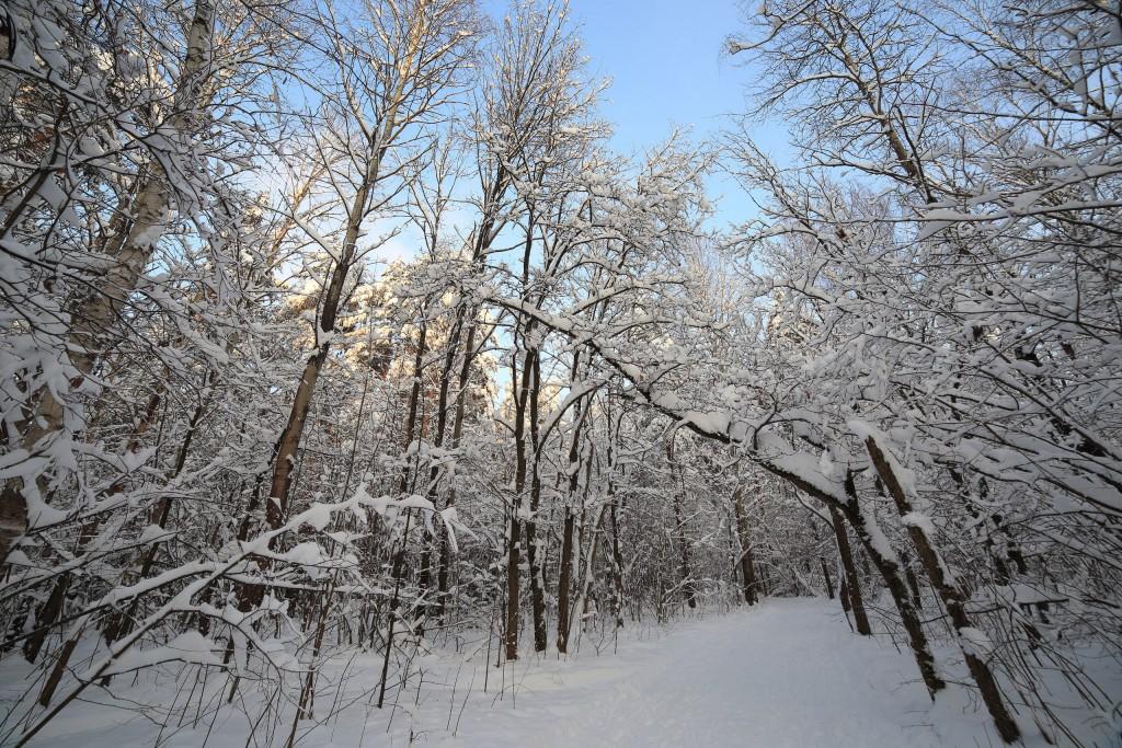 Февральская прогулка в парке Дружба 02