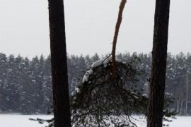 Зима в покровском лесу.
