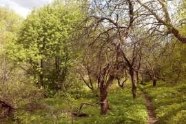 Май прекрасен даже такой холодный и на фотографиях смартфона. 2017 год. Заброшенные сады у реки Лыбеди.