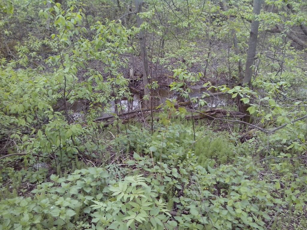 Май прекрасен даже такой холодный и на фотографиях смартфона. 2017 год. Заброшенные сады у реки Лыбеди. 04