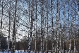 Март в парке «Добросельский». Город Владимир.