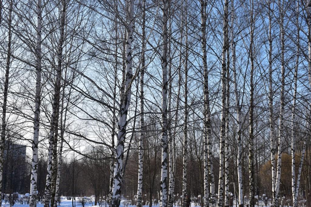 Март в парке Добросельский. Город Владимир. 01