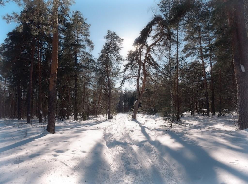 деревня Богданцево, Судогодский р-н 07