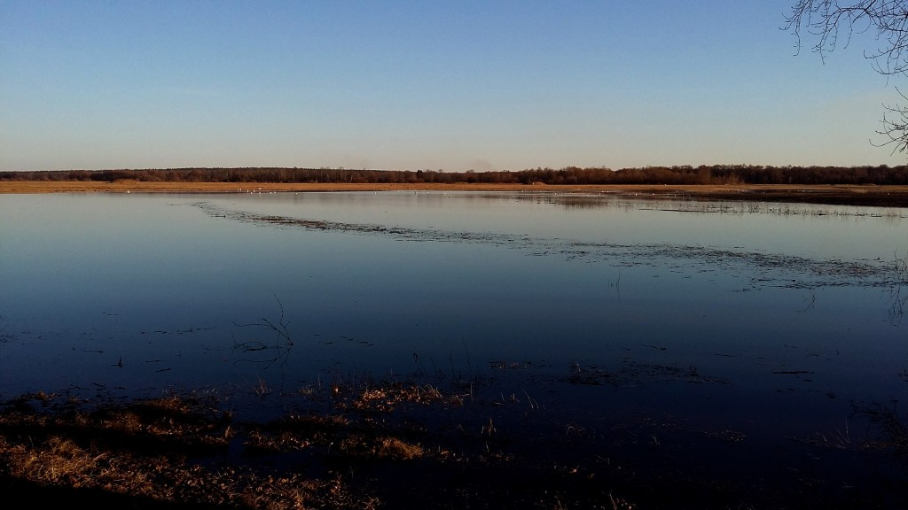 Весенние пейзажи реки Нерль 05