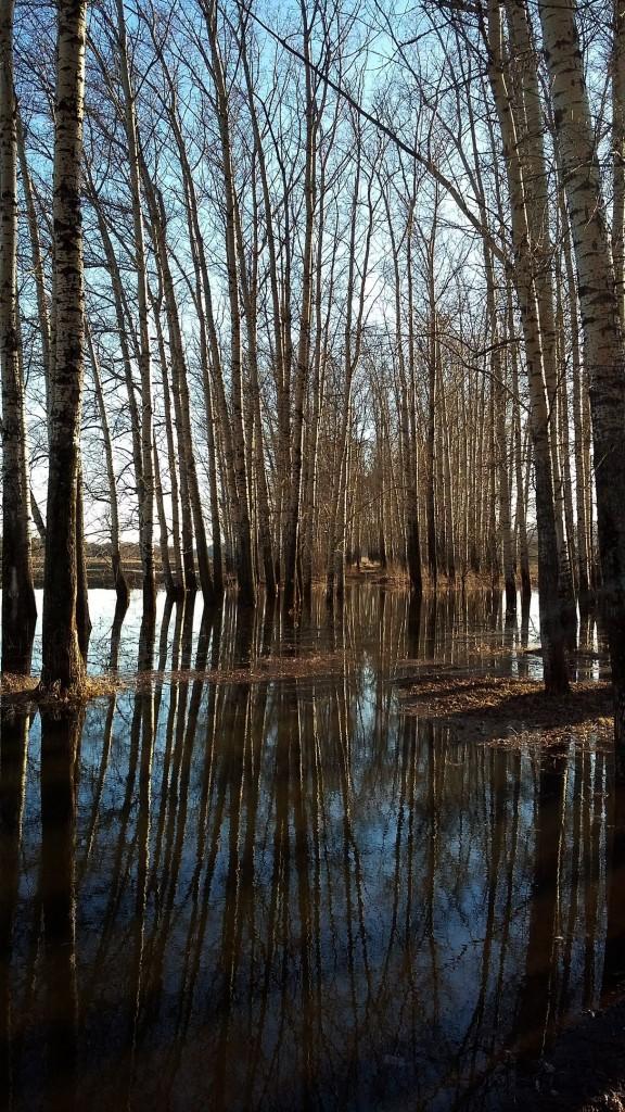 Весенние пейзажи реки Нерль 07