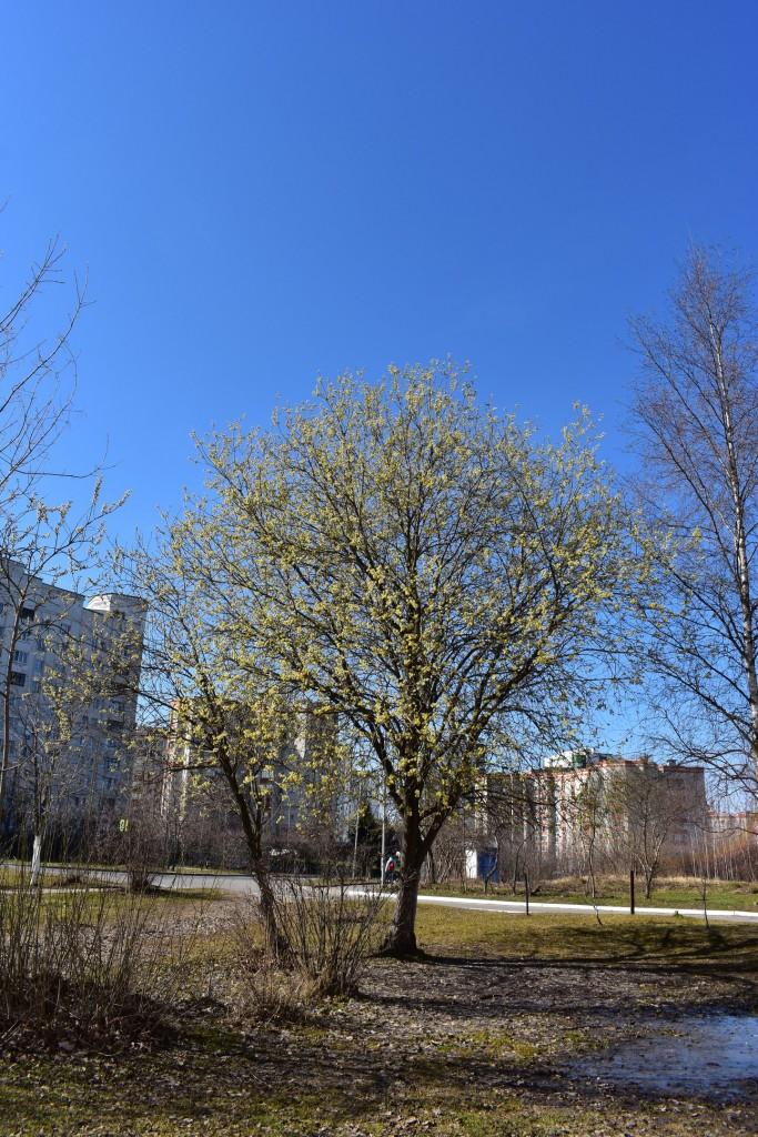 Весенняя прогулка в парке у Дворца детского творчества 04