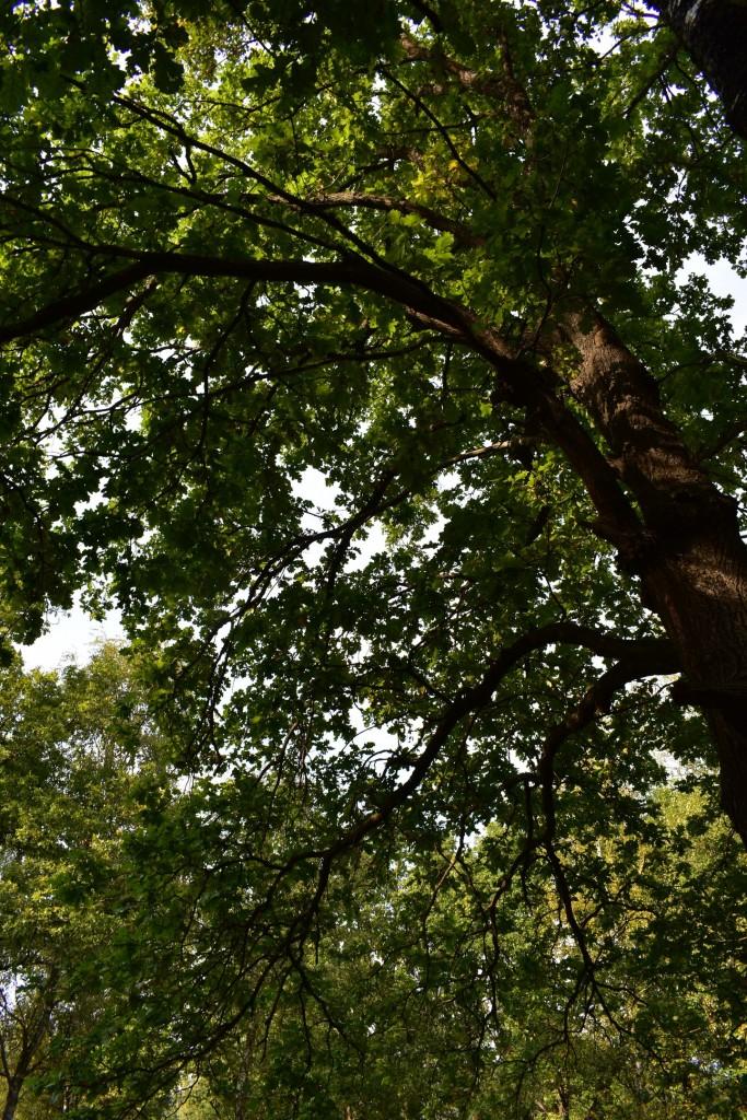 Вспоминая короткое лето... Загородный парк. Август 2017. 05