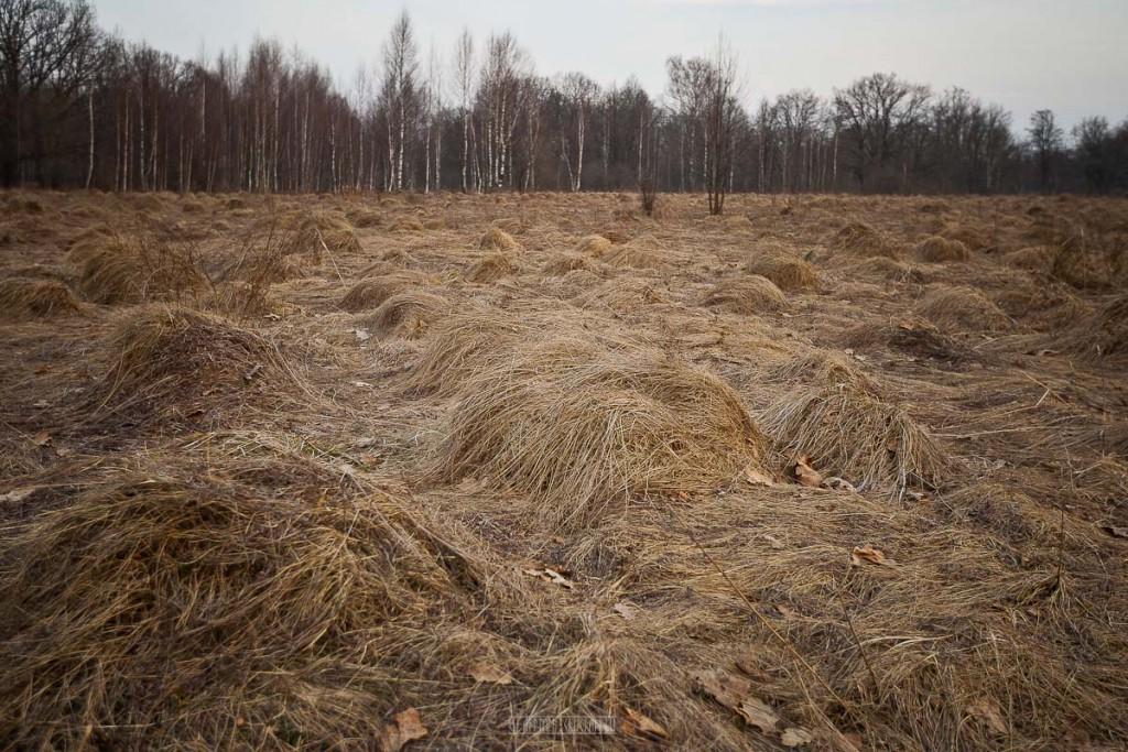Загородный парк во Владимире, апрель 2018 06