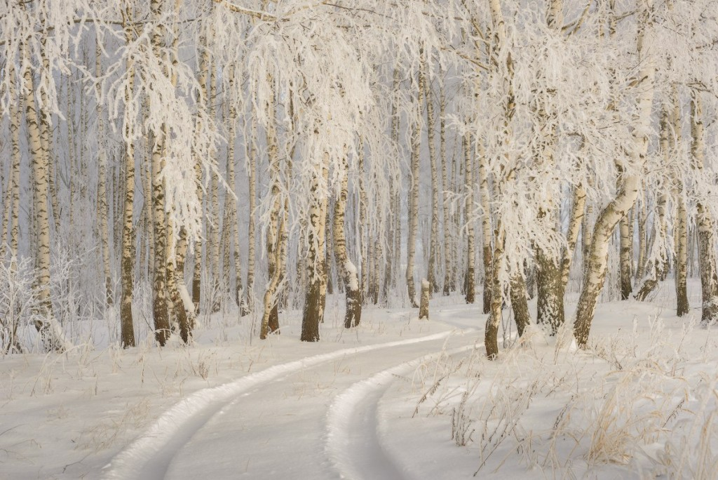 Зима в Вязниковском районе (2018) 03