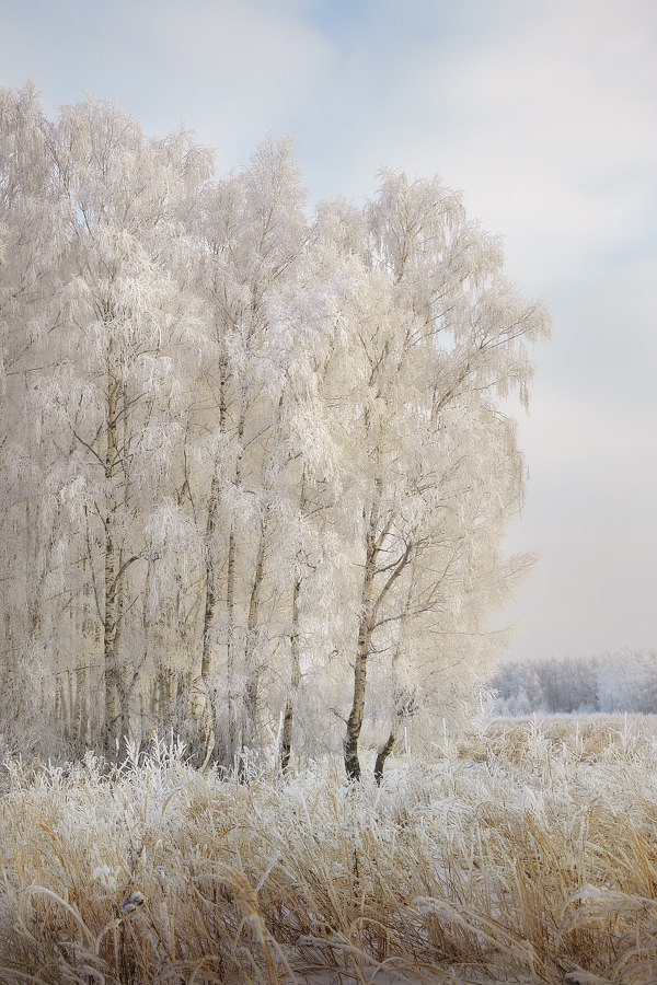 Зима в Вязниковском районе (2018) 09