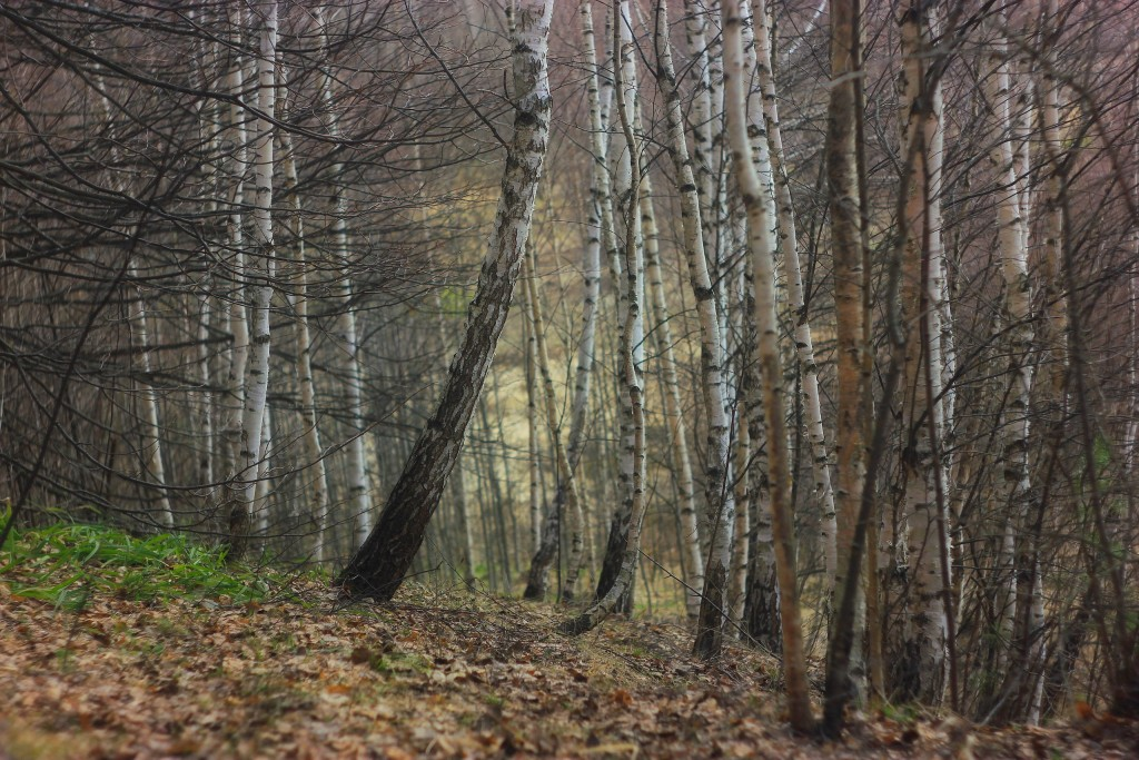 Окрестности села Горицы, Суздальский район 10