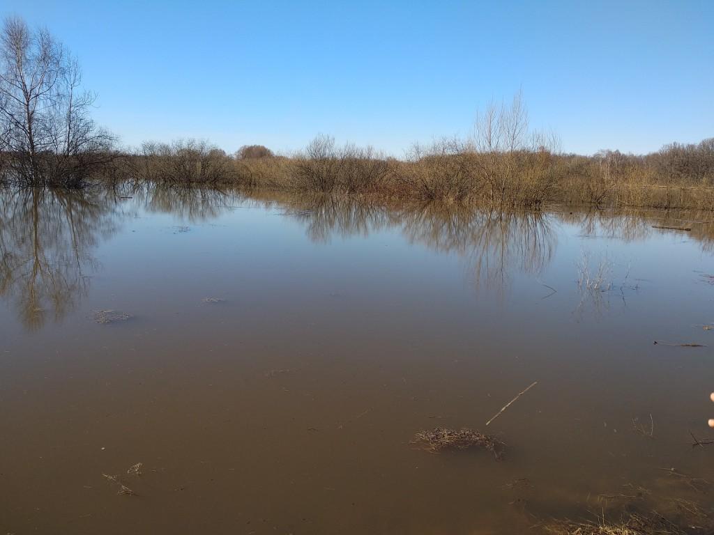 Разлив Клязьмы близ д. Любцы, Ковровский район 03