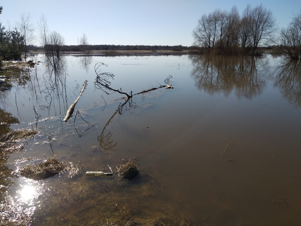 Разлив Клязьмы близ д. Любцы, Ковровский район 04