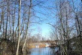 Разлив реки Киржач в окрестностях деревни Ветчи Петушинский район.