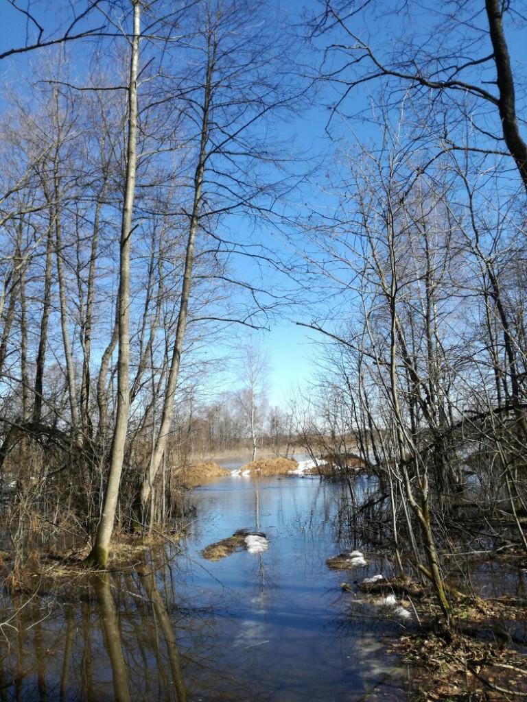 Разлив реки Киржач в окрестностях деревни Ветчи Петушинский район 01