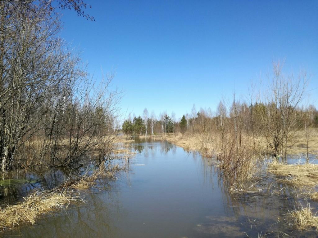 Разлив реки Киржач в окрестностях деревни Ветчи Петушинский район 02