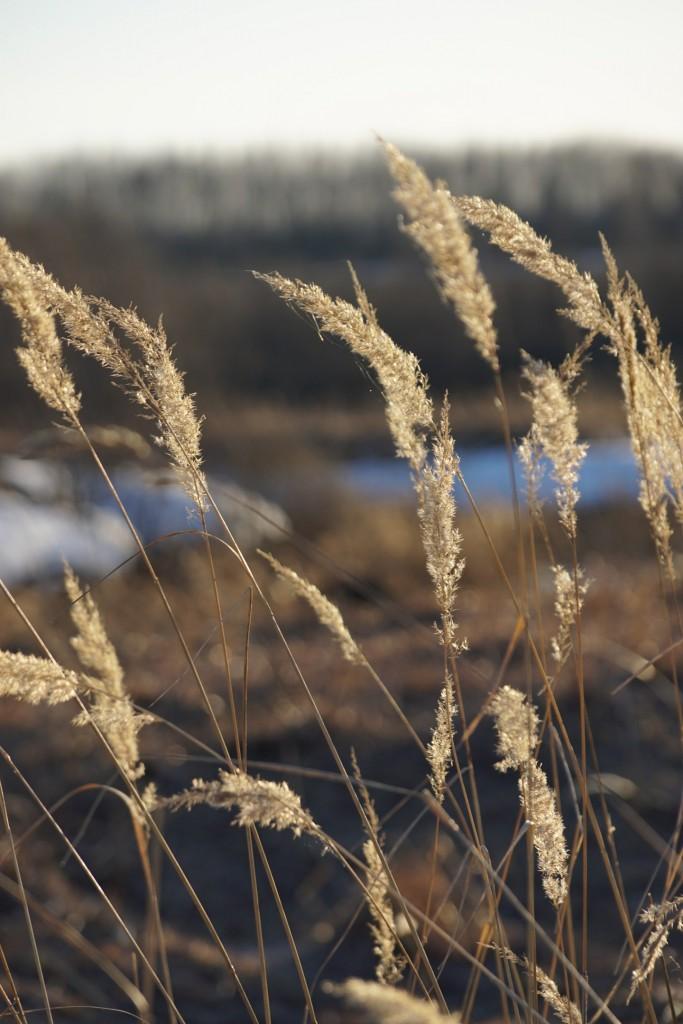 Село Горицы, Суздальский район 06
