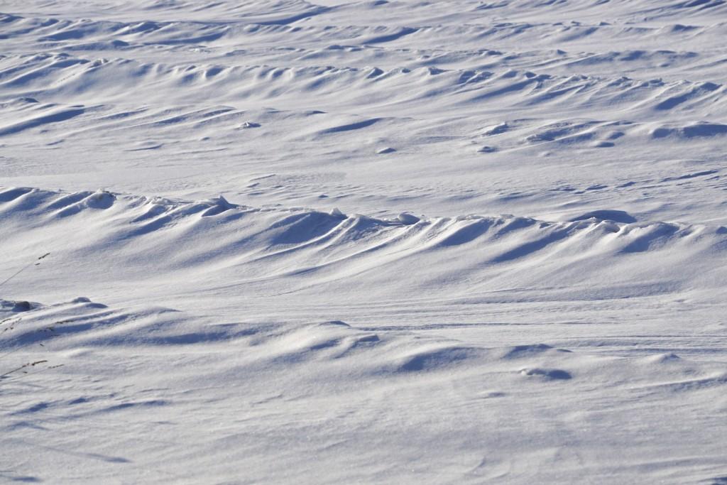 Снежные волны на Суздальских полях 05
