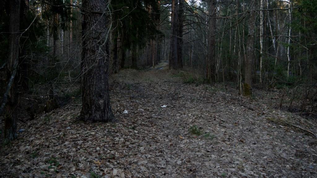 Старая Владимирка в лесу.