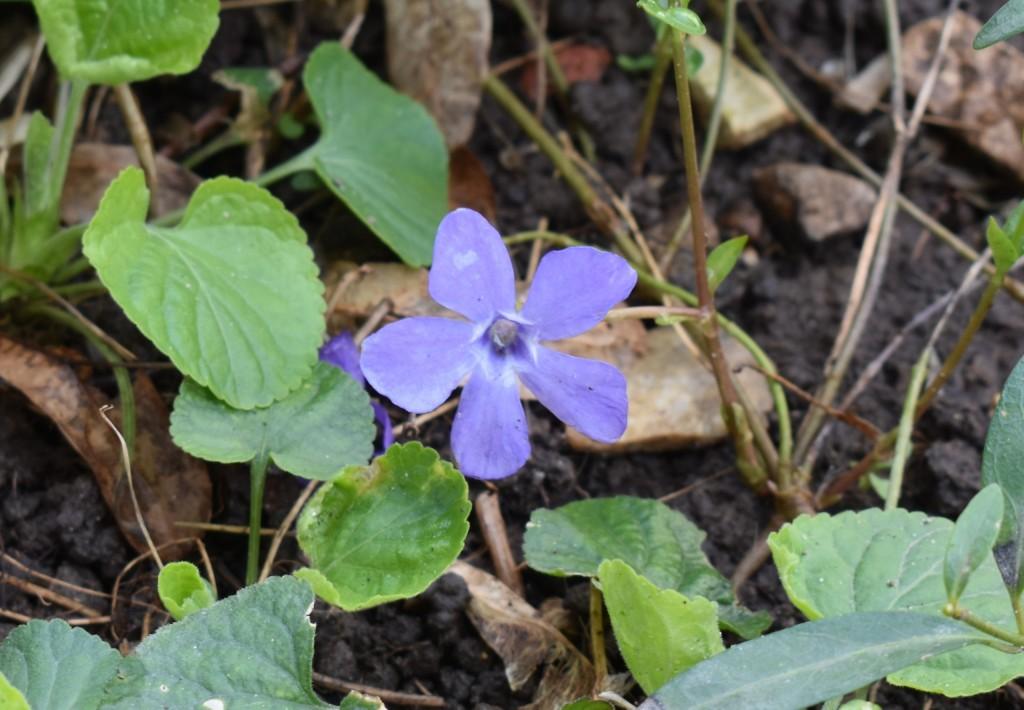 Апрельские цветы в городе 01