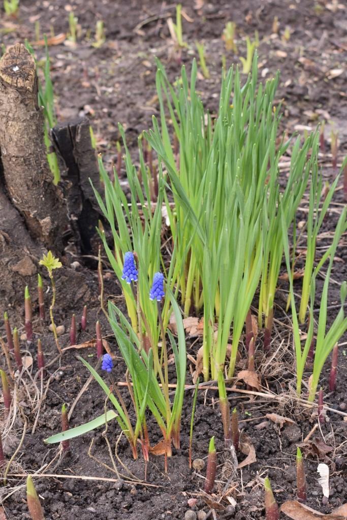 Апрельские цветы в городе 02