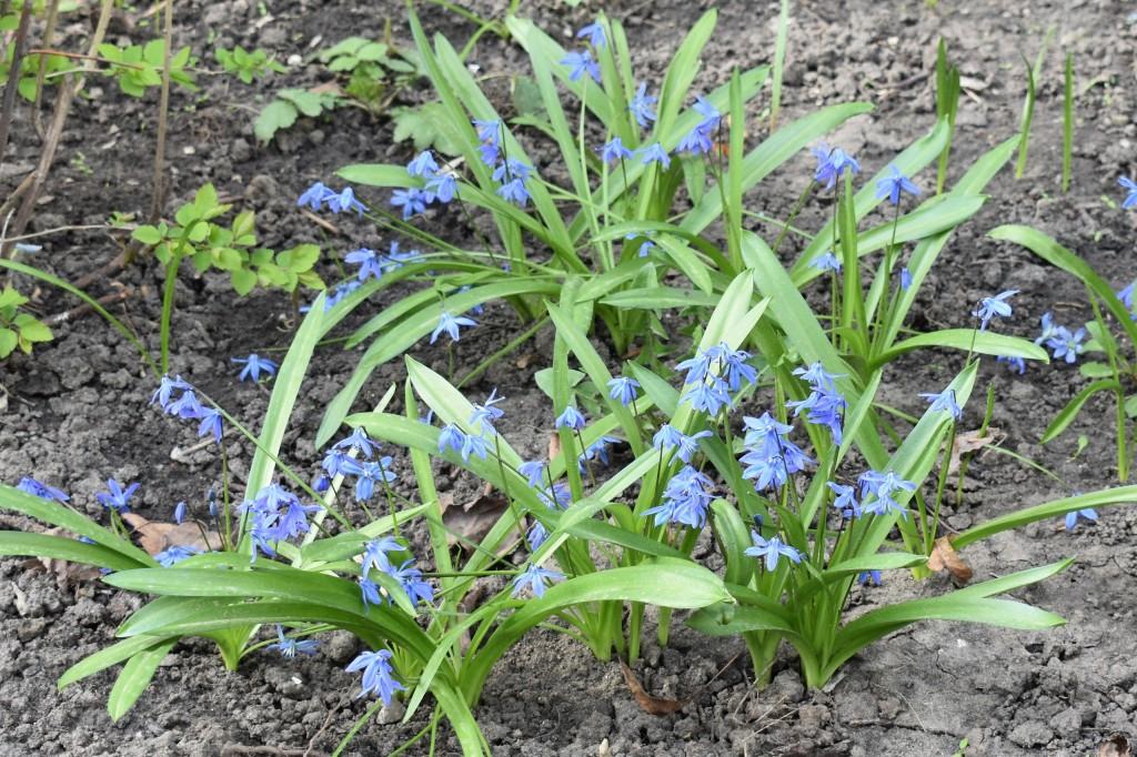 Апрельские цветы в городе 03
