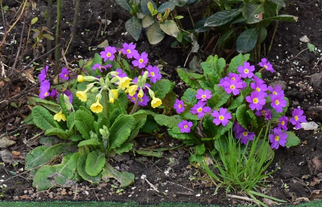 Апрельские цветы в городе 04