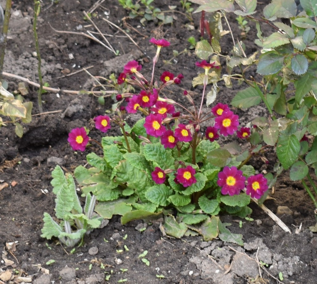 Апрельские цветы в городе 05
