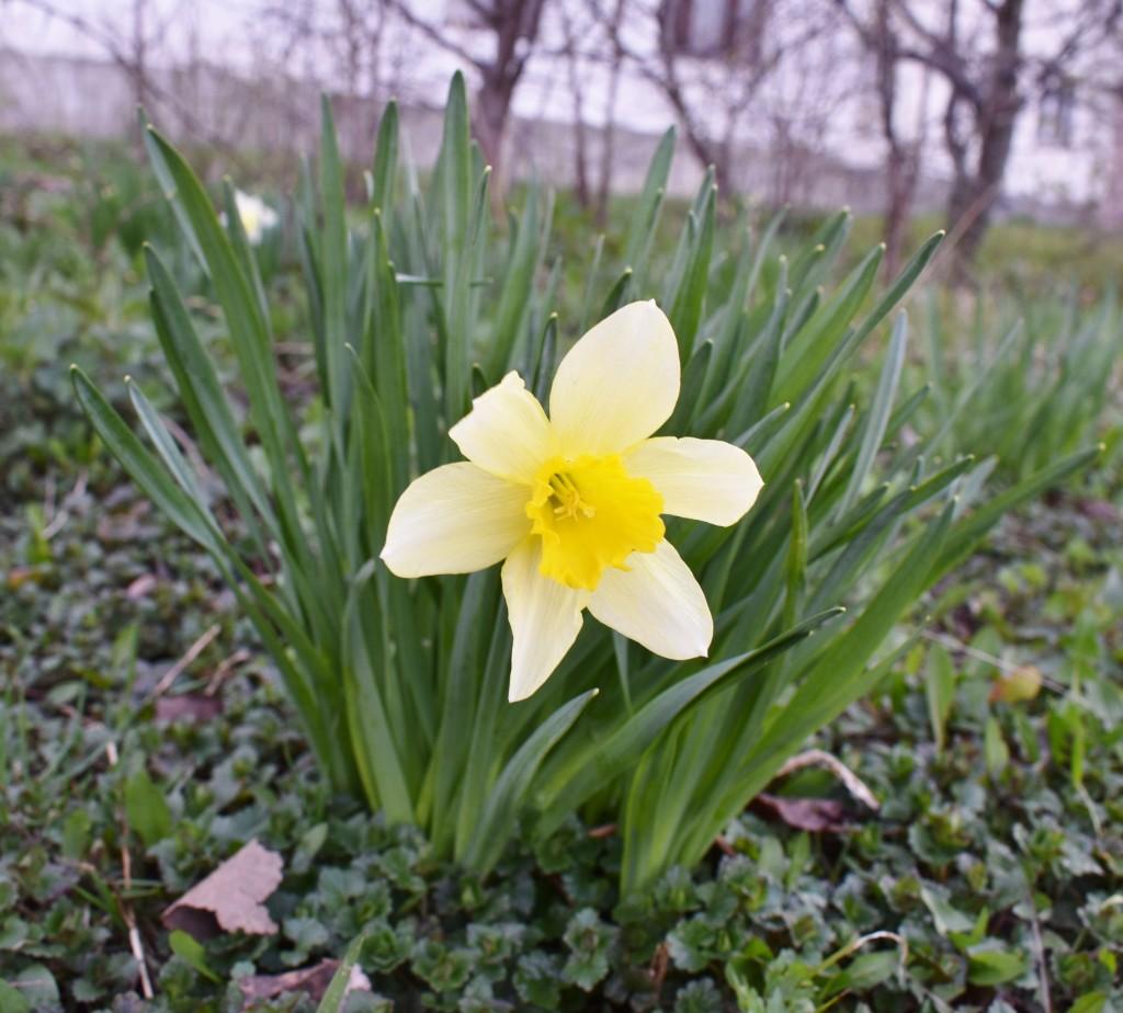 Апрельские цветы в городе 06