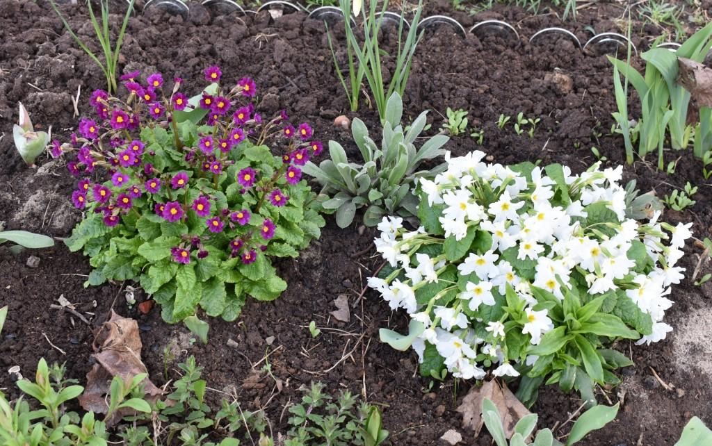 Апрельские цветы в городе 07